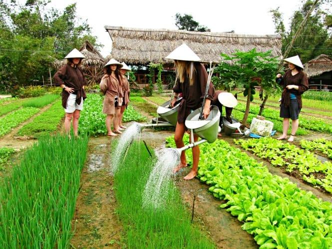tưới rau nông dân